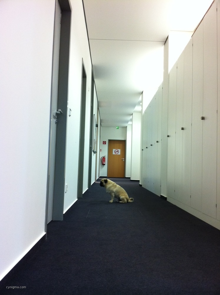wachhund-wacht